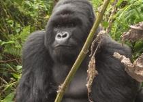 22b-5-visitor-places-Gorilla-trekking