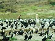 QE2 National Park - water birds